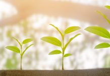 you can ensure that your ecosystem is an engine for long-term growth